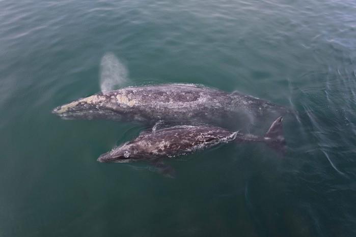 Самый дружелюбный кит в мире (фотографии)