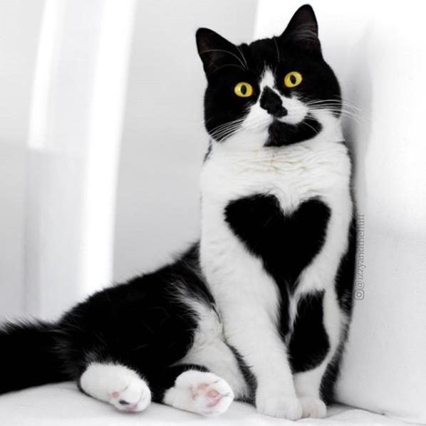 3085196_Screenshot20171123_Pyblikaciya_Izzy_Zoe_The_Cats_v_Instagram_o_Noya_14_2017_v_9_08_UTC (598x598, 348Kb)