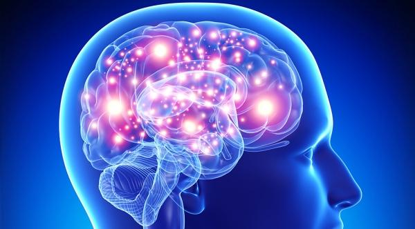 brain (600x332, 144Kb)
