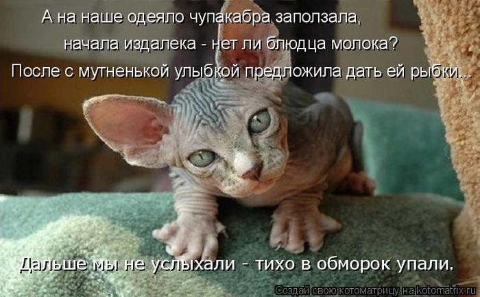 kotomatritsa_3K (700x434, 380Kb)
