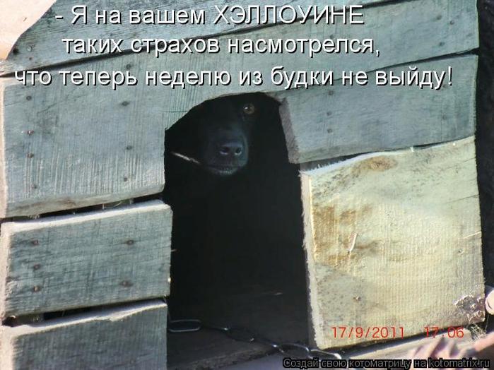 kotomatritsa_73 (700x524, 438Kb)