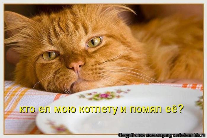 kotomatritsa_aq (700x466, 387Kb)