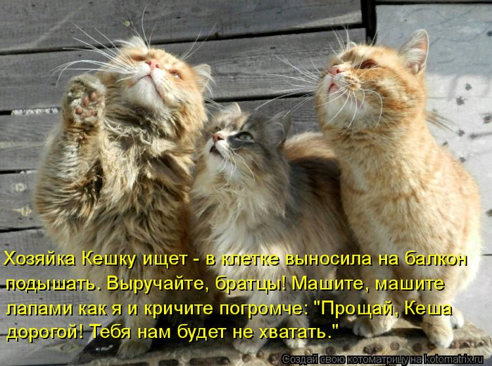 kotomatritsa_C (2) (700x521, 516Kb)