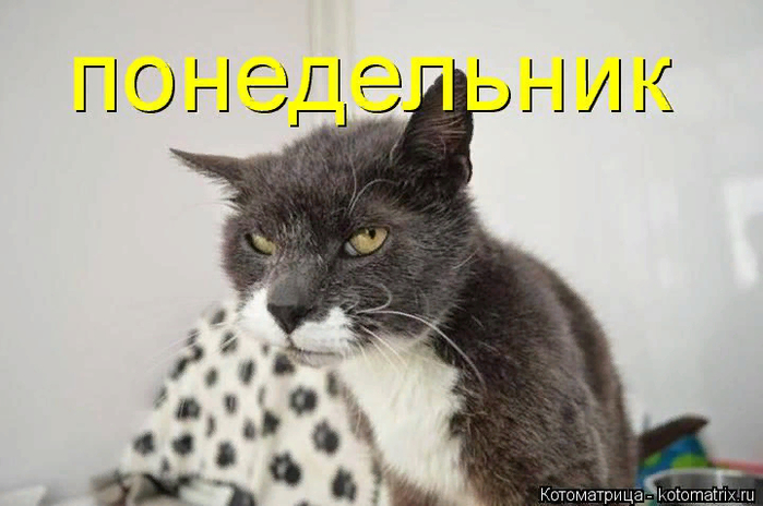 kotomatritsa_C (700x464, 283Kb)