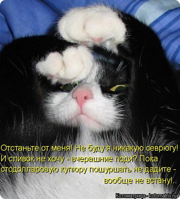 kotomatritsa_gu (590x651, 434Kb)