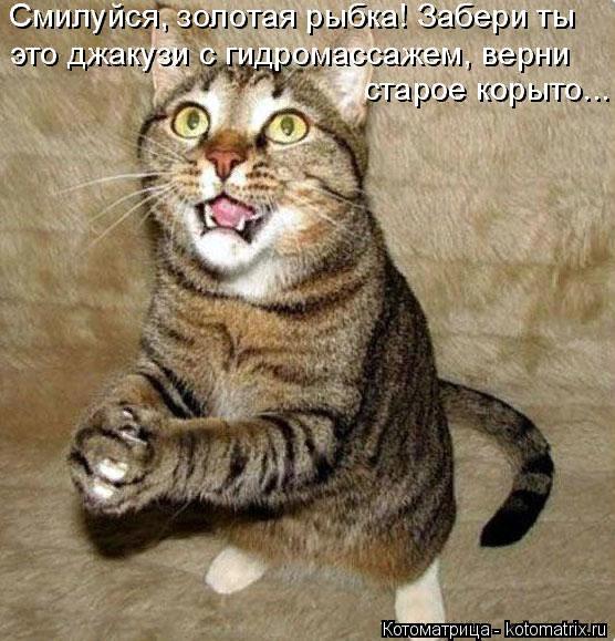 kotomatritsa_of (556x579, 397Kb)