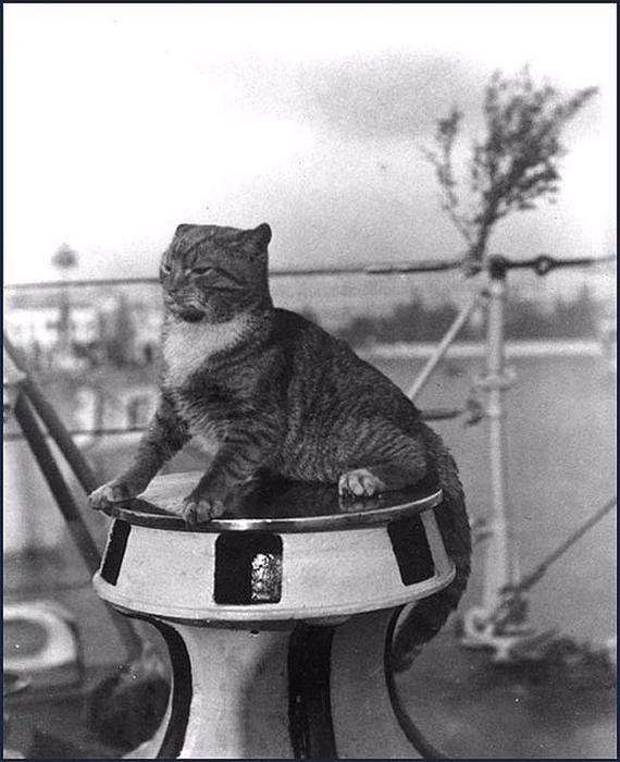 catsSea_15 (570x700, 220Kb)