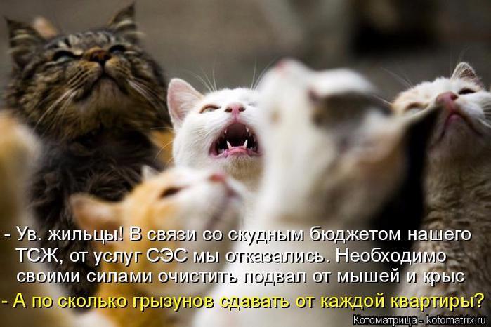 kotomatritsa_5 (700x466, 319Kb)