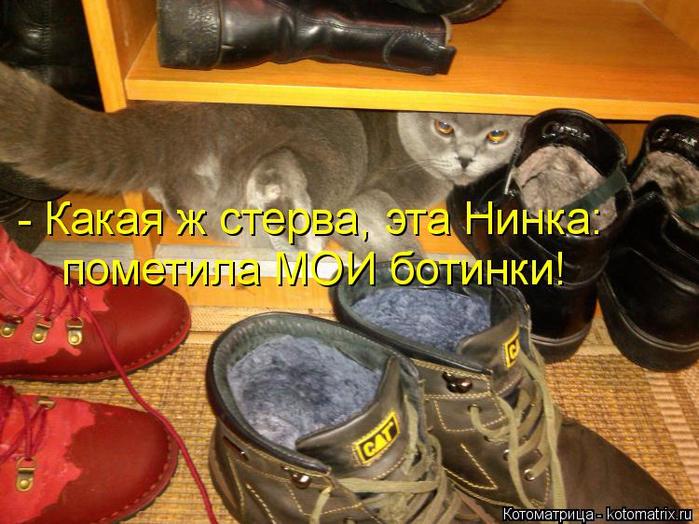 kotomatritsa_Dh (700x524, 445Kb)