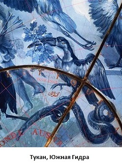 Тукан Южная Гидра (248x330, 51Kb)