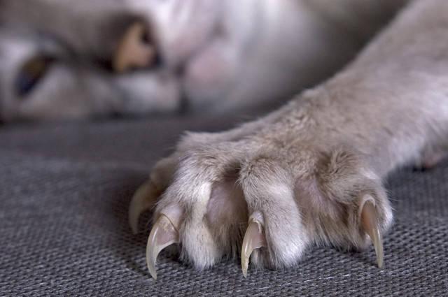 когти кошки9 (640x425, 104Kb)
