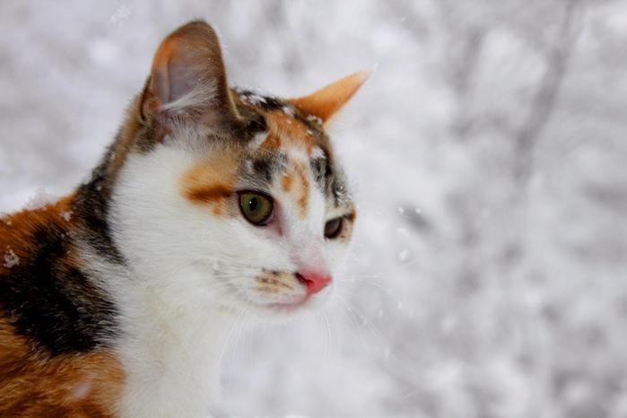 кошки6 (700x466, 308Kb)