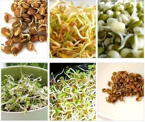 Проростки - эффективный вариант для здоровой диеты