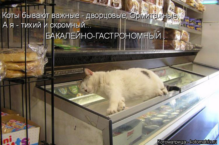 kotomatritsa_B (700x465, 353Kb)