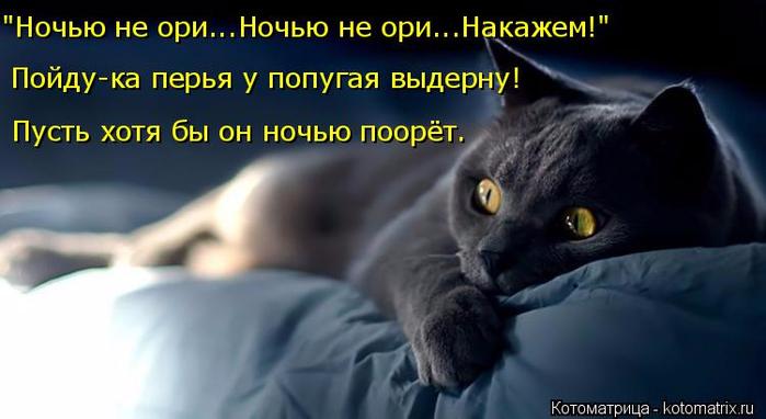 kotomatritsa_E (700x382, 230Kb)
