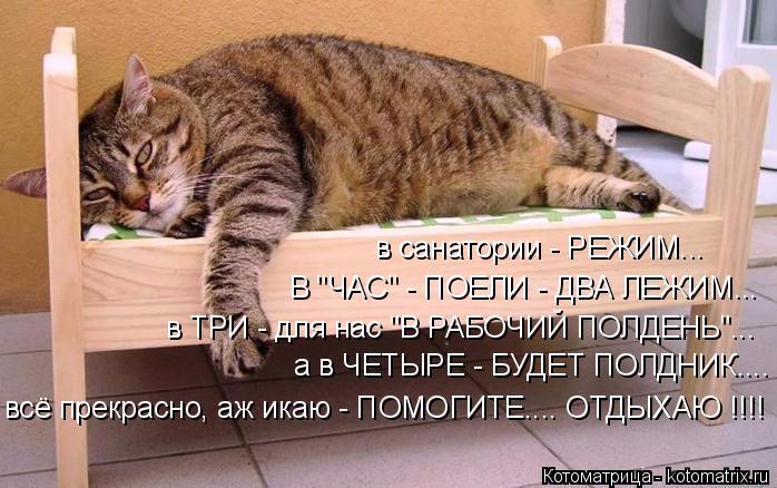 kotomatritsa_w (698x438, 260Kb)