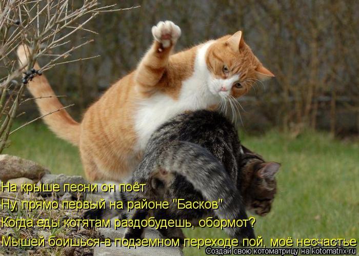 kotomatritsa_xg (700x499, 422Kb)