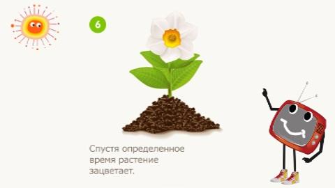 как растёт цветокросток вырос (480x270, 50Kb)
