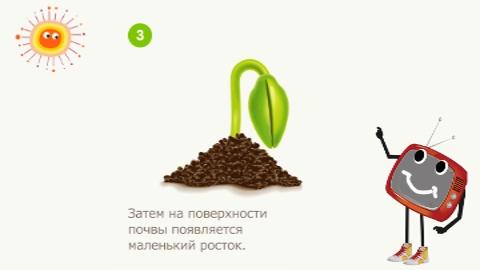 как растёт цветокросток (480x270, 22Kb)