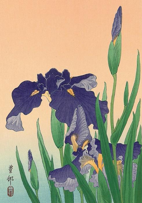 Flowering Iris. (490x700, 405Kb)