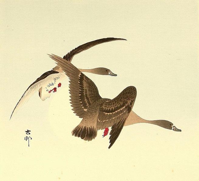 Geese in Flight. (655x596, 273Kb)