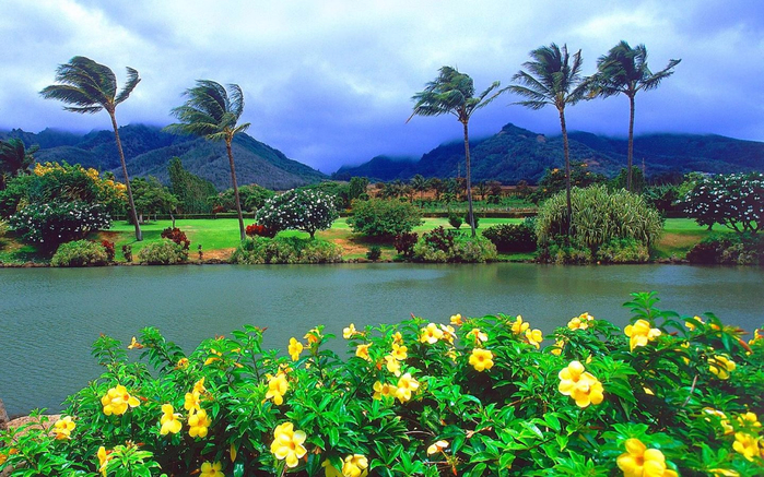 Maui-Island-is-the-second-largest-island-in-the-Hawaiian-Islands-Yellow-Flower-Lake-Tree-Palm-Mountain-Tropical-Nature-Landscape-1920x1200-1440x900 (700x437, 471Kb)