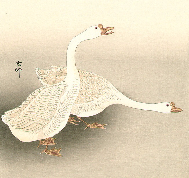 Two White Geese (651x615, 384Kb)