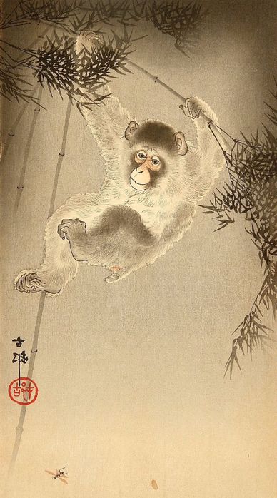 Monkey (388x700, 296Kb)