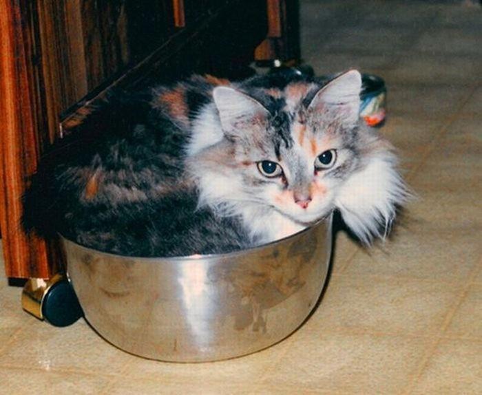 Среда обитания. 100 воскресных фото котиков в самых неожиданных местах