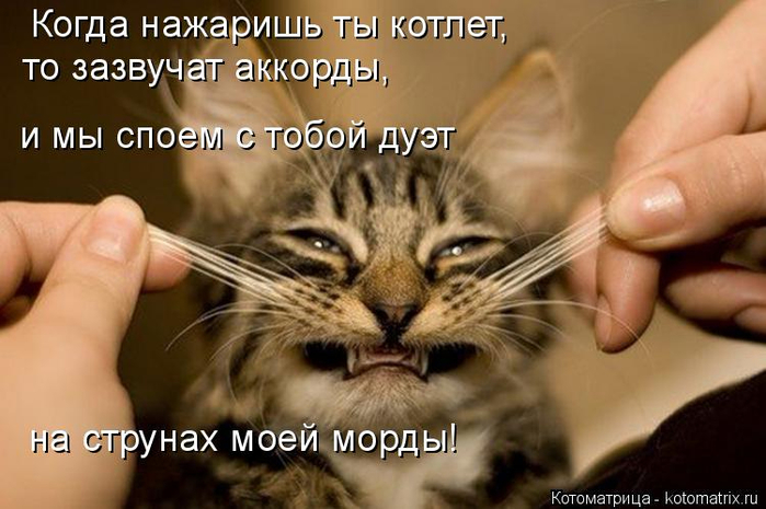 kotomatritsa_Pg (700x465, 310Kb)