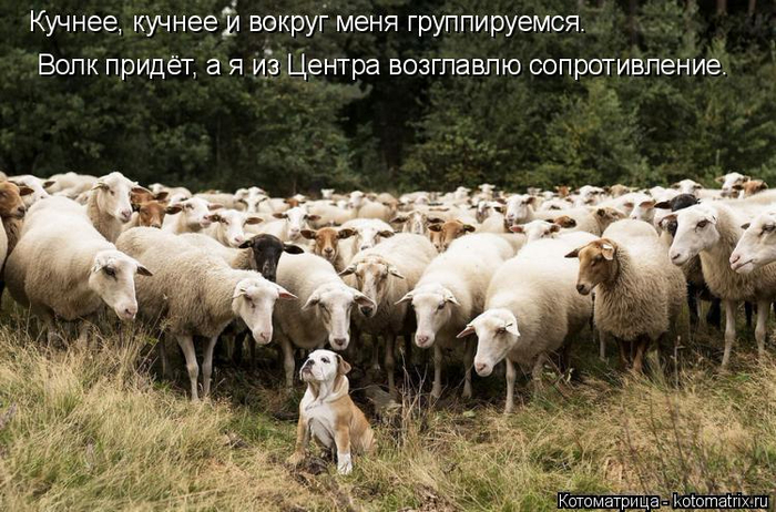 kotomatritsa_y (700x462, 386Kb)