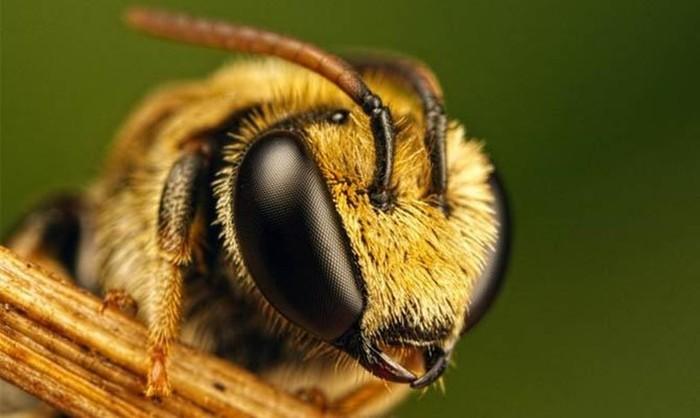 Интересные факты о пчелах и пчеловодстве