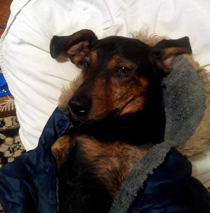 Купить тёплый недорогой комбез на собаку