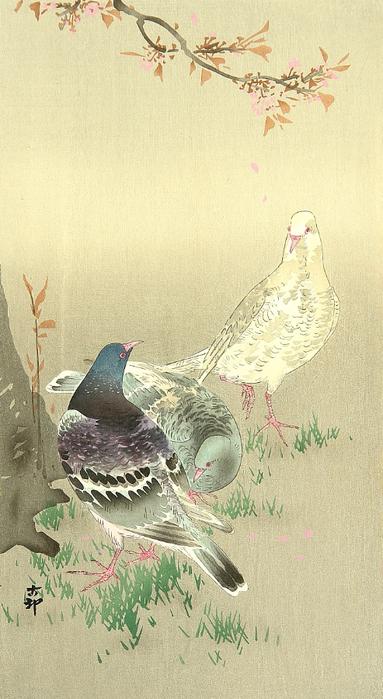 Pigeons under Cherry Tree (383x700, 329Kb)