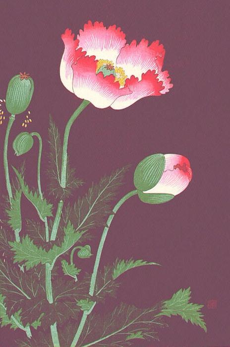 Poppies (464x700, 344Kb)