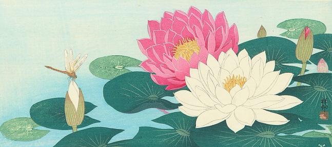 Цветы лотоса и стрекоза (647x287, 215Kb)