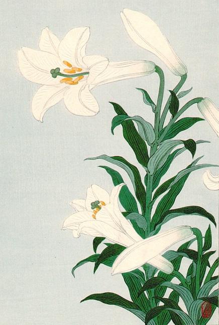White_lilies (436x647, 263Kb)