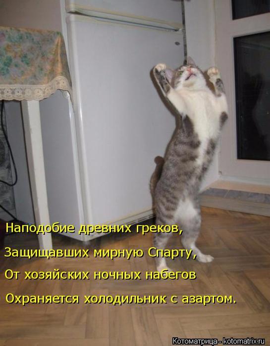 kotomatritsa__a (545x700, 315Kb)