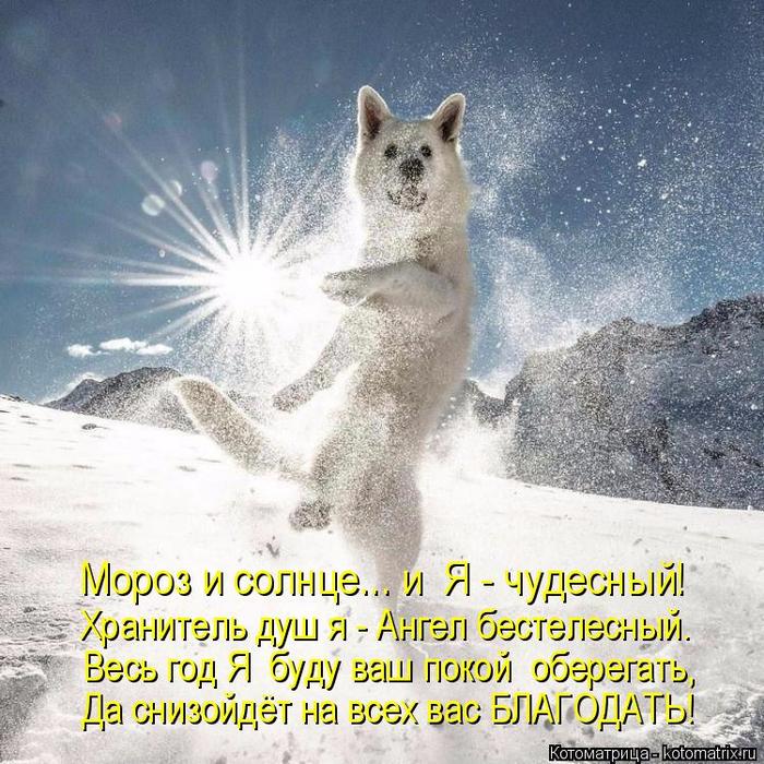 kotomatritsa_E (700x700, 537Kb)