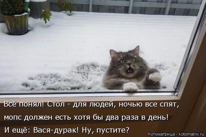 kotomatritsa_Gb (700x466, 261Kb)
