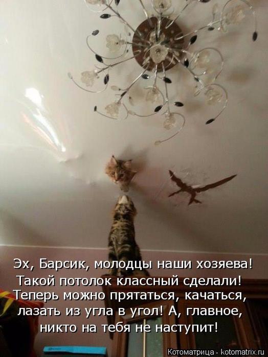 kotomatritsa_O (524x700, 310Kb)