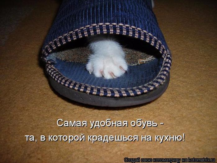 kotomatritsa_s (700x524, 381Kb)
