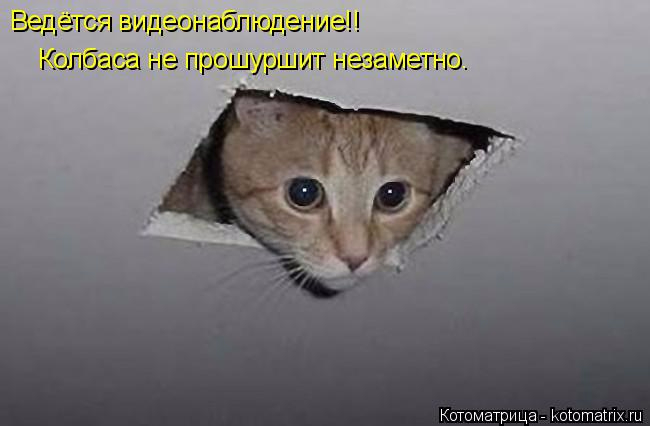 kotomatritsa_Y (1) (650x426, 107Kb)
