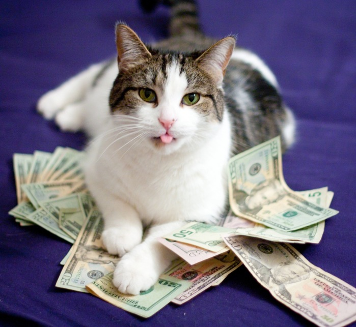 cat-with-money1 (700x643, 113Kb)