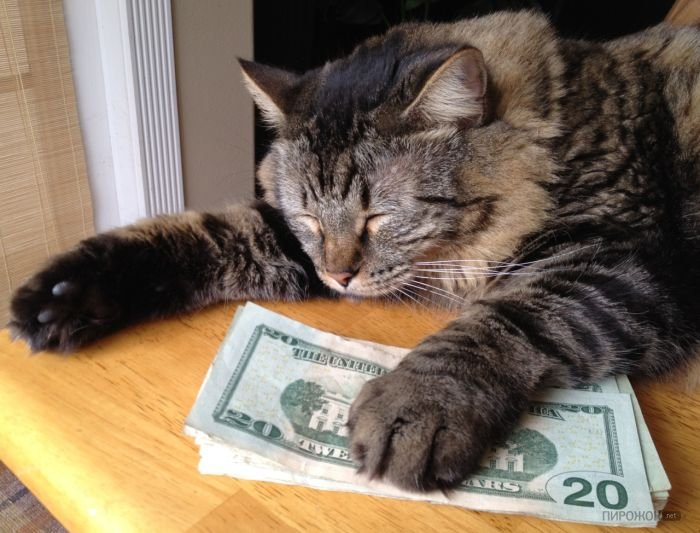 1342308710_1035_cash_cats_22_1 (700x533, 75Kb)