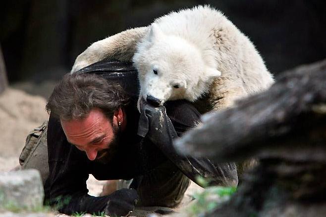 Белый медвежонок завтракает в Берлинском зоопарке   редкое видео