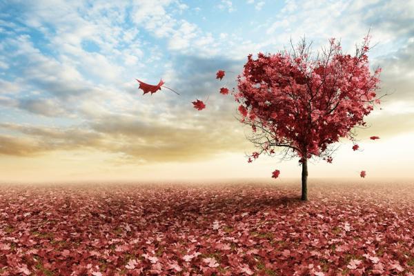 Любовь. Рефлексы и инстинкты