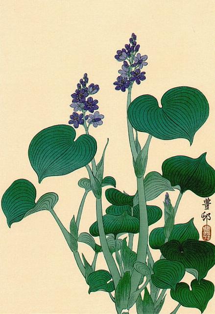 Purple Flowering Hosta (439x640, 120Kb)