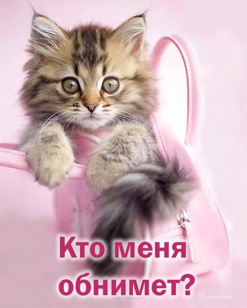 http://img1.liveinternet.ru/images/attach/d/0/139/805/139805959_5672049_16142182_374317042930144_4773530990262828839_n.jpg