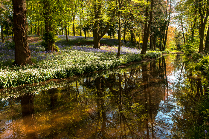 United_Kingdom_Spring_Forests_Pond_Snowdrops_524385_1280x853 (700x466, 702Kb)